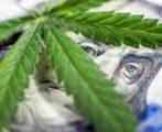investire in cannabis